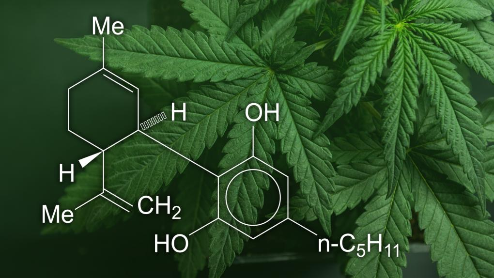 tipos de aceite Cannabidiol CBD